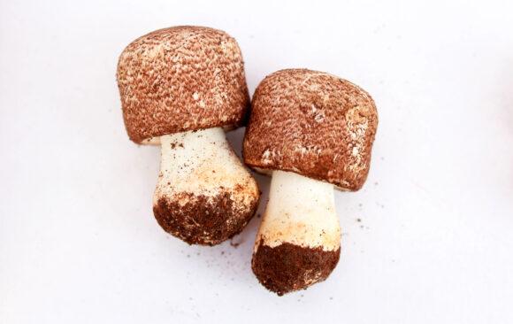 Quais são os benefícios do Cogumelo Agaricus blazei?