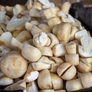 Como posso utilizar o Cogumelo Agaricus blazei?